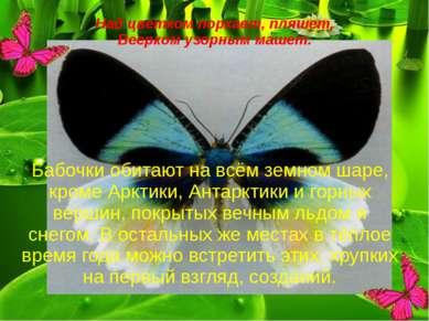Над цветком порхает, пляшет, Веерком узорным машет. Бабочки обитают на всём з...