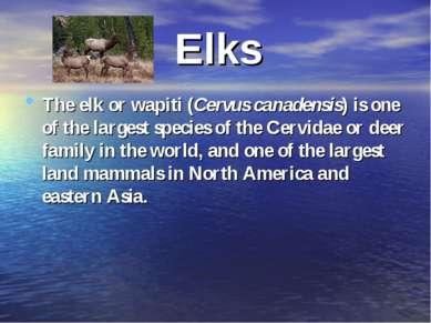 Elks The elk or wapiti (Cervus canadensis) is one of the largest species of t...