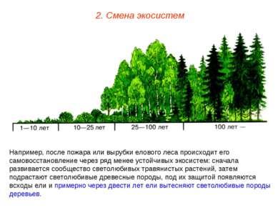2. Смена экосистем Например, после пожара или вырубки елового леса происходит...