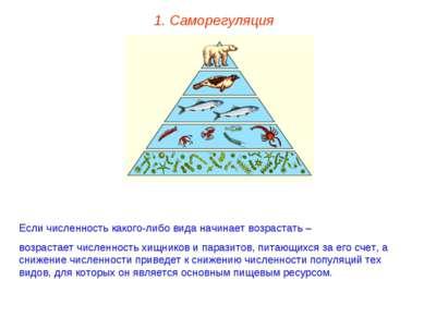 1. Саморегуляция Если численность какого-либо вида начинает возрастать – возр...