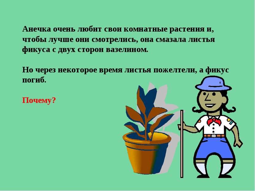 Анечка очень любит свои комнатные растения и, чтобы лучше они смотрелись, она...