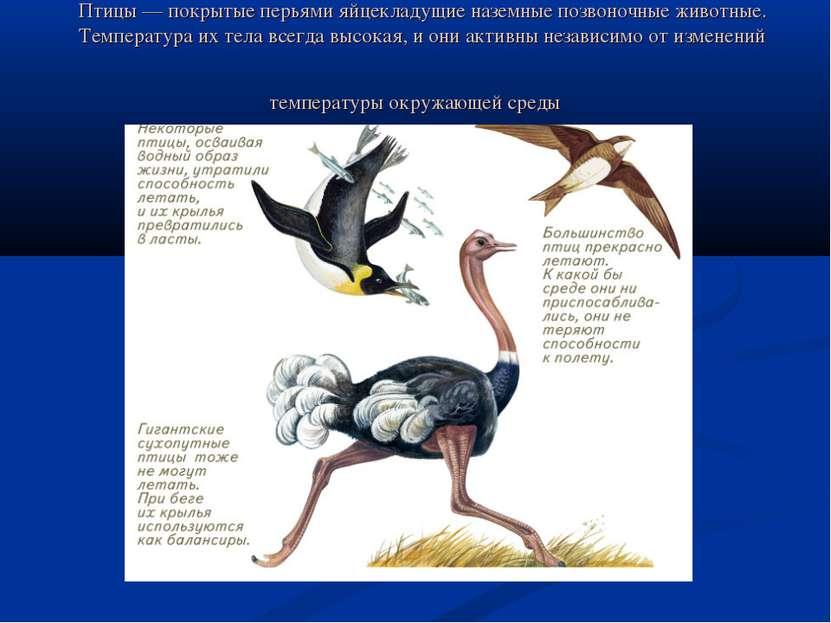 Птицы — покрытые перьями яйцекладущие наземные позвоночные животные. Температ...