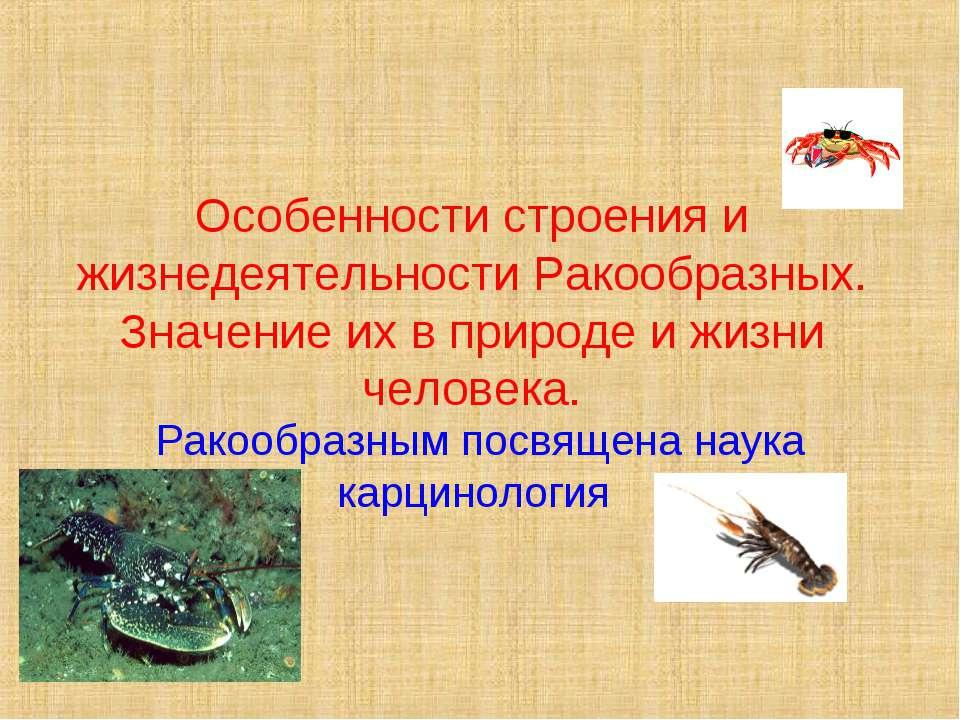 Особенности строения и жизнедеятельности Ракообразных. Значение их в природе ...