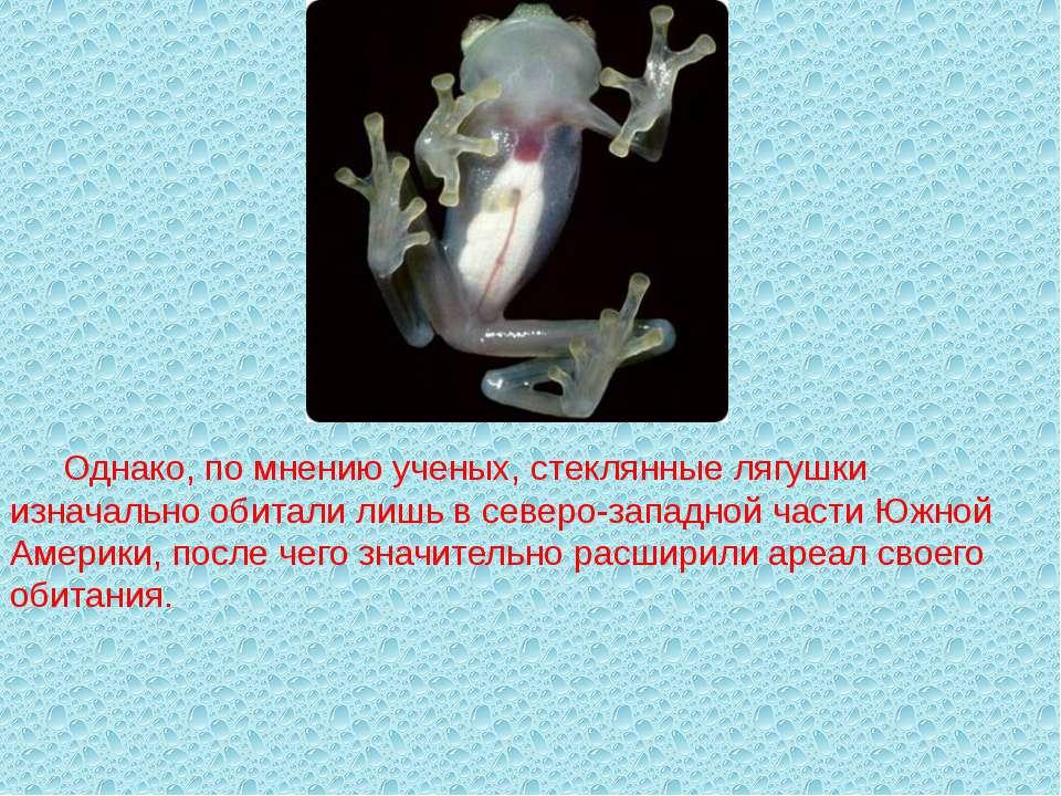 Однако, по мнению ученых, стеклянные лягушки изначально обитали лишь в северо...