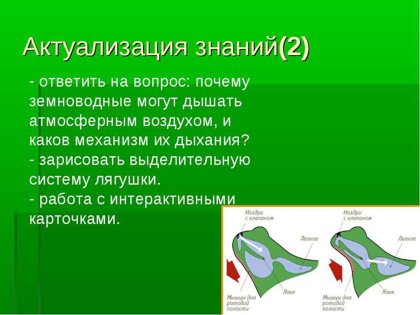 Актуализация знаний(2) - ответить на вопрос: почему земноводные могут дышать ...
