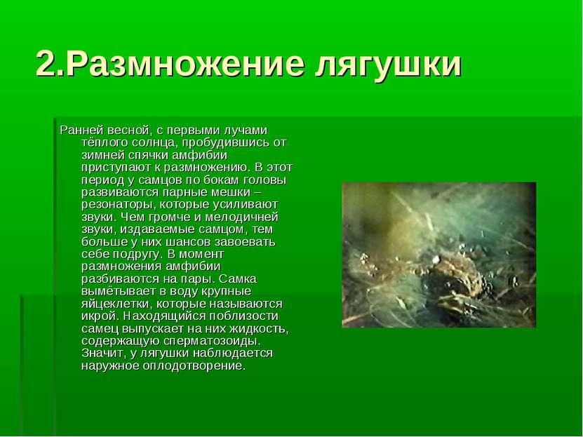 2.Размножение лягушки Ранней весной, с первыми лучами тёплого солнца, пробуди...