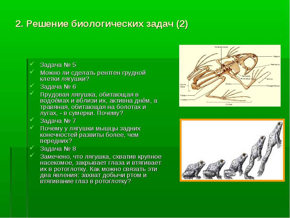 2. Решение биологических задач (2) Задача № 5 Можно ли сделать рентген грудно...