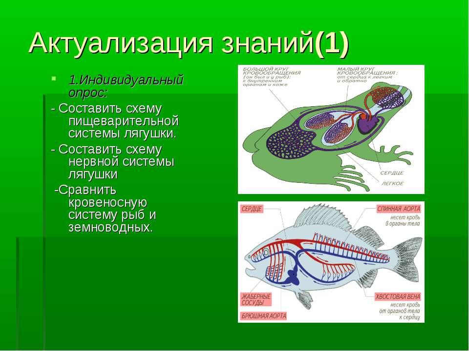 Актуализация знаний(1) 1.Индивидуальный опрос: - Составить схему пищеваритель...
