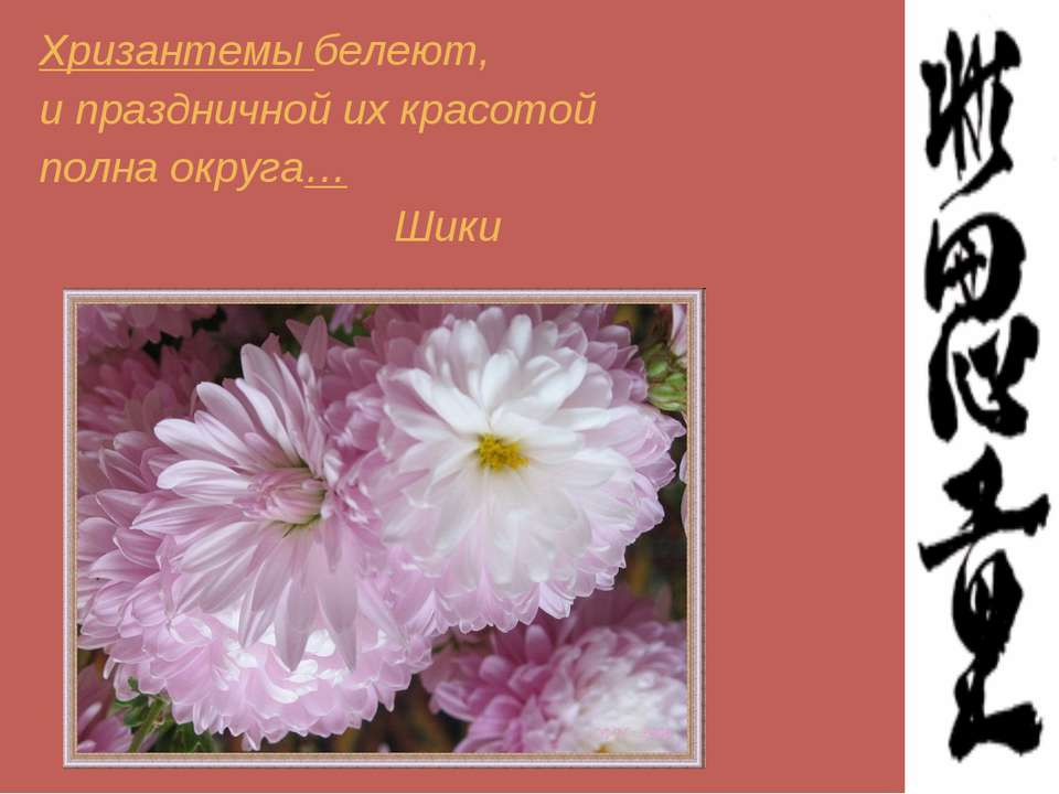 Хризантемы белеют, и праздничной их красотой полна округа… Шики