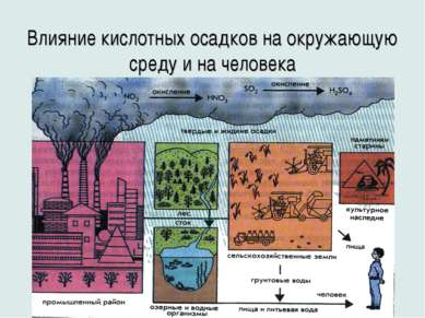 Влияние кислотных осадков на окружающую среду и на человека