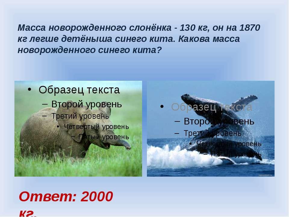 Масса новорожденного слонёнка - 130 кг, он на 1870 кг легше детёныша синего к...