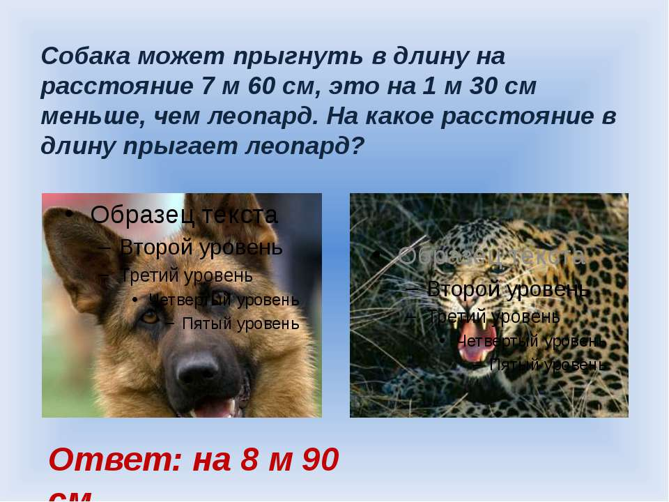 Собака может прыгнуть в длину на расстояние 7 м 60 см, это на 1 м 30 см меньш...
