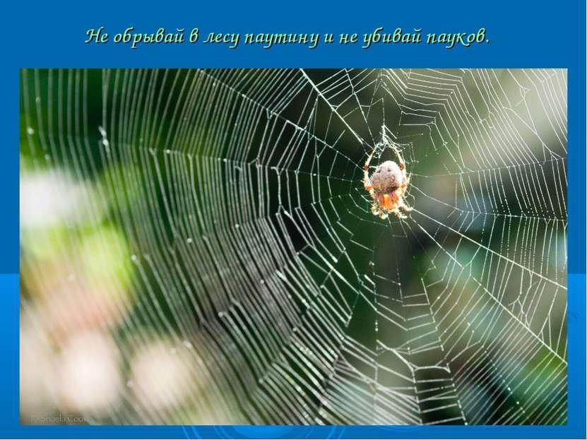 Не обрывай в лесу паутину и не убивай пауков.