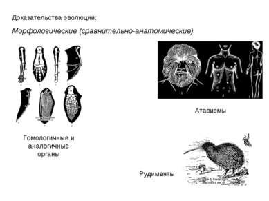 Доказательства эволюции: Морфологические (сравнительно-анатомические) Гомолог...