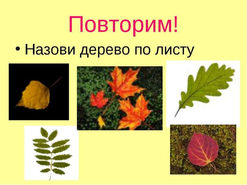 Повторим! Назови дерево по листу