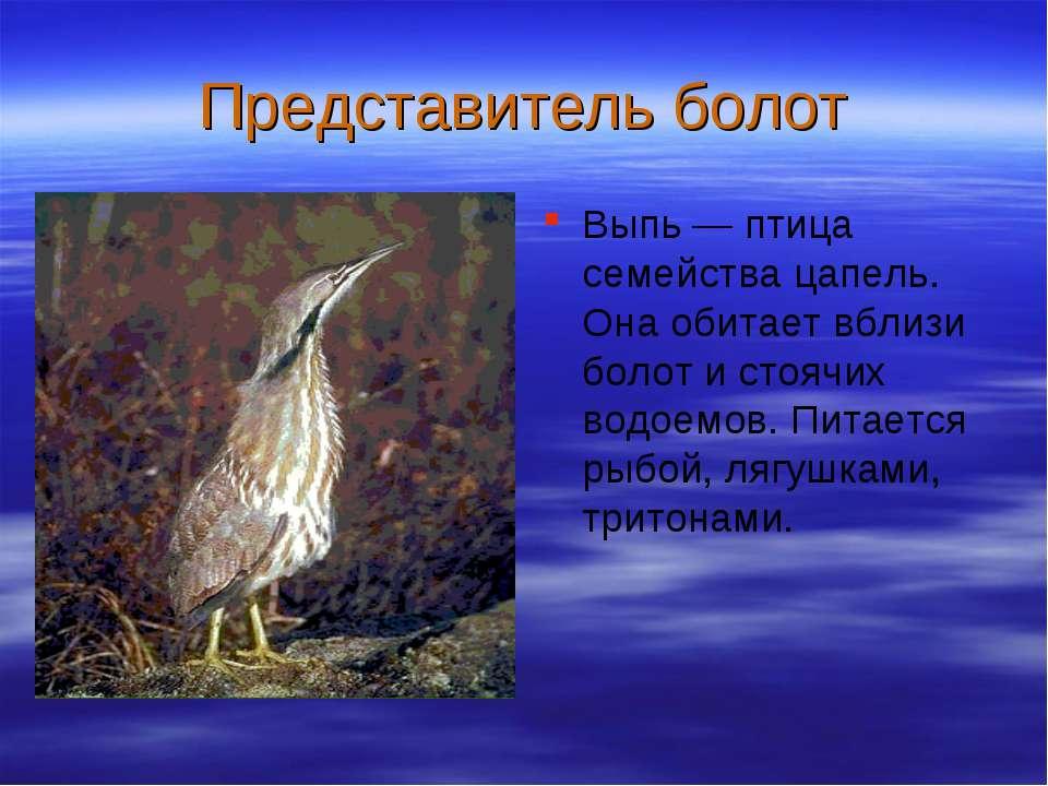 Представитель болот Выпь — птица семейства цапель. Она обитает вблизи болот и...