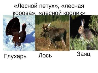«Лесной петух», «лесная корова», «лесной кролик» Глухарь Лось Заяц