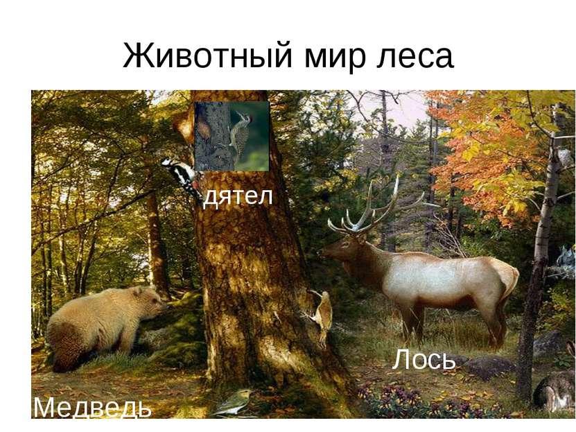 Животный мир леса Лось Медведь дятел
