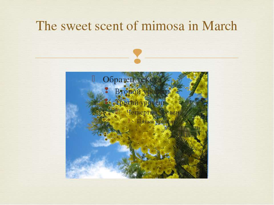 The sweet scent of mimosa in March