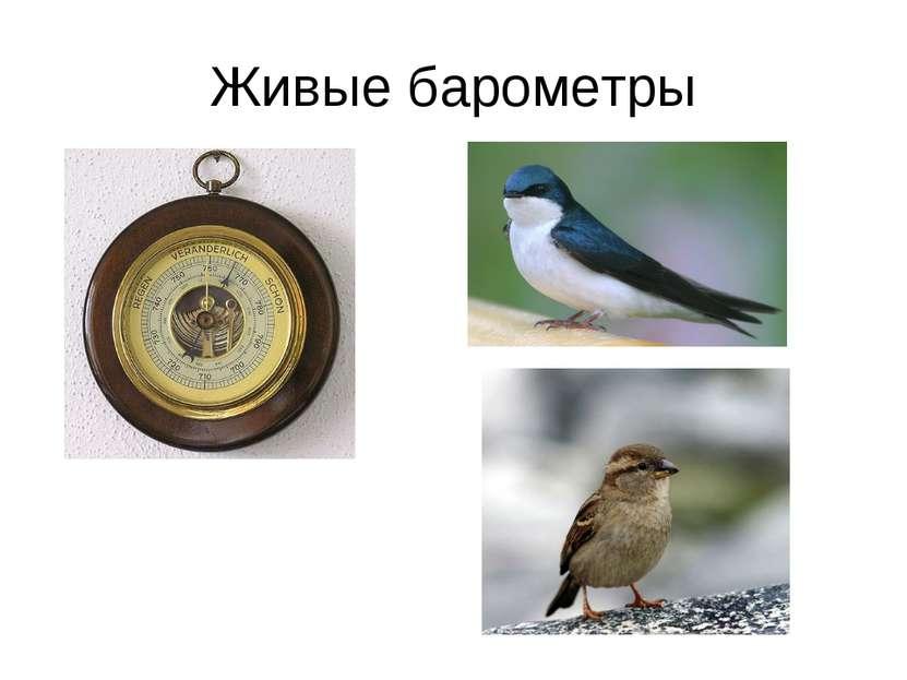 Живые барометры