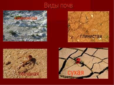 Виды почв каменистая песчаная глинистая сухая