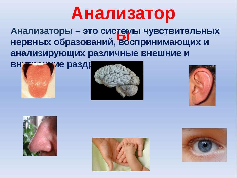 Анализаторы Анализаторы – это системы чувствительных нервных образований, вос...