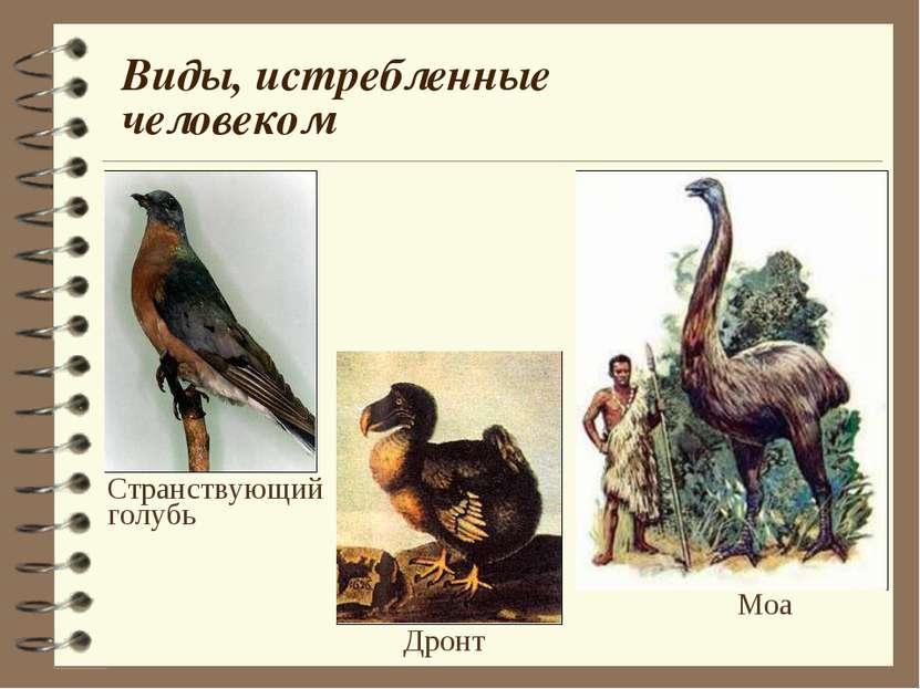 Виды, истребленные человеком Странствующий голубь Моа Дронт