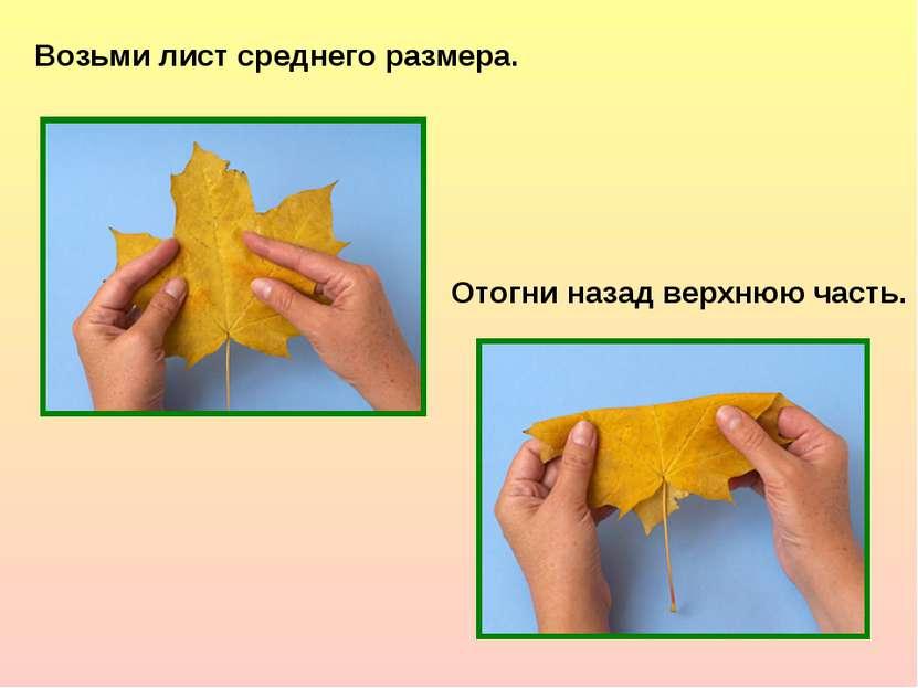 Возьми лист среднего размера. Отогни назад верхнюю часть.