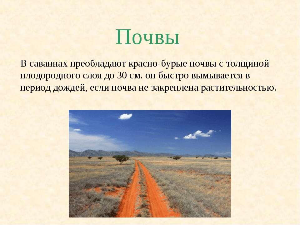 Почвы В саваннах преобладают красно-бурые почвы с толщиной плодородного слоя ...