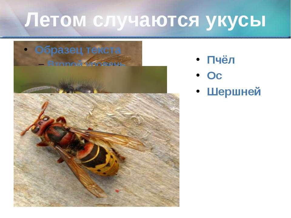 Летом случаются укусы Пчёл Ос Шершней