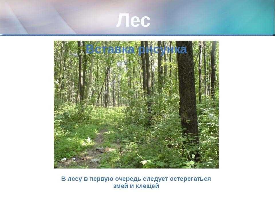 Лес В лесу в первую очередь следует остерегаться змей и клещей