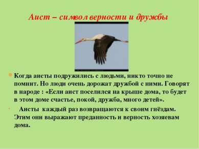 Аист – символ верности и дружбы Когда аисты подружились с людьми, никто точно...