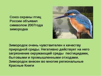 Зимородок очень чувствителен к качеству природной среды. Негативно действует ...