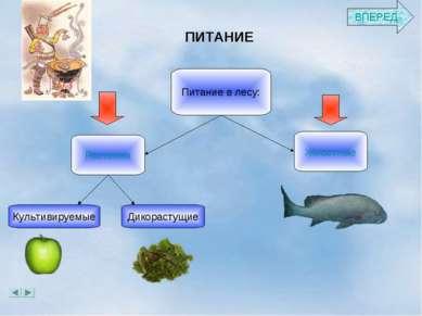 ПИТАНИЕ Растения Животные Питание в лесу: Культивируемые Дикорастущие ВПЕРЕД