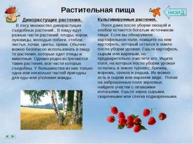 Растительная пища НАЗАД Дикорастущие растения.  В лесу множество дикорасту...
