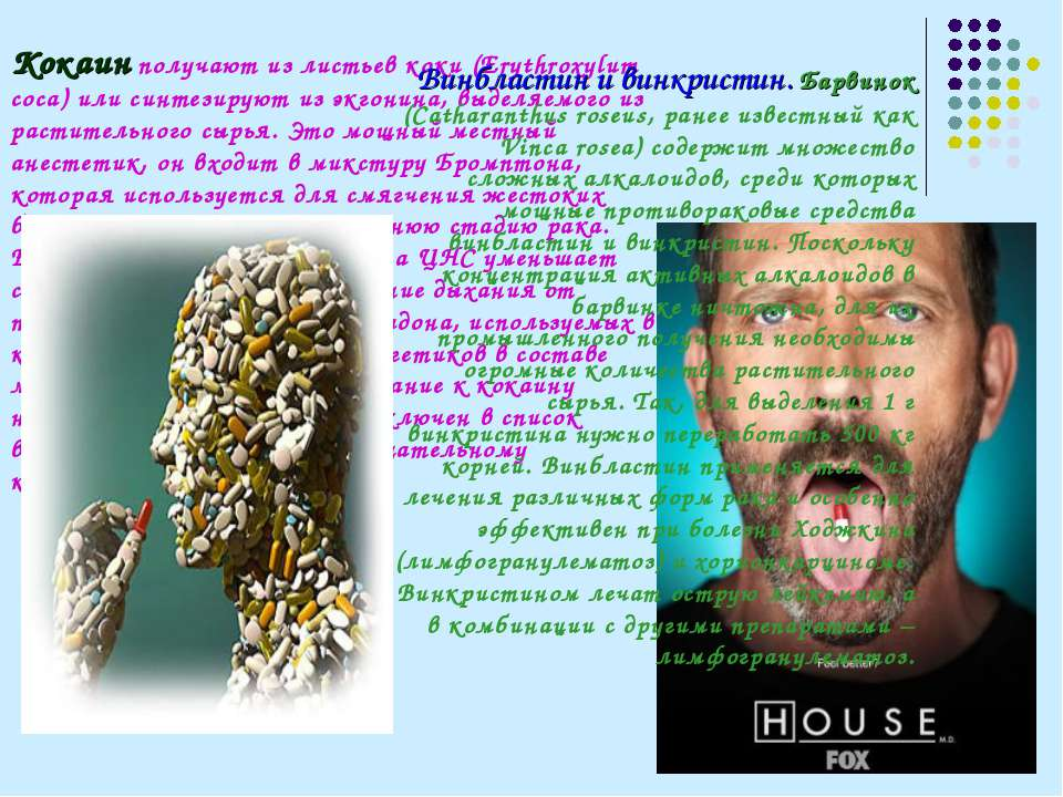 Кокаин получают из листьев коки (Erythroxylum coca) или синтезируют из экгони...