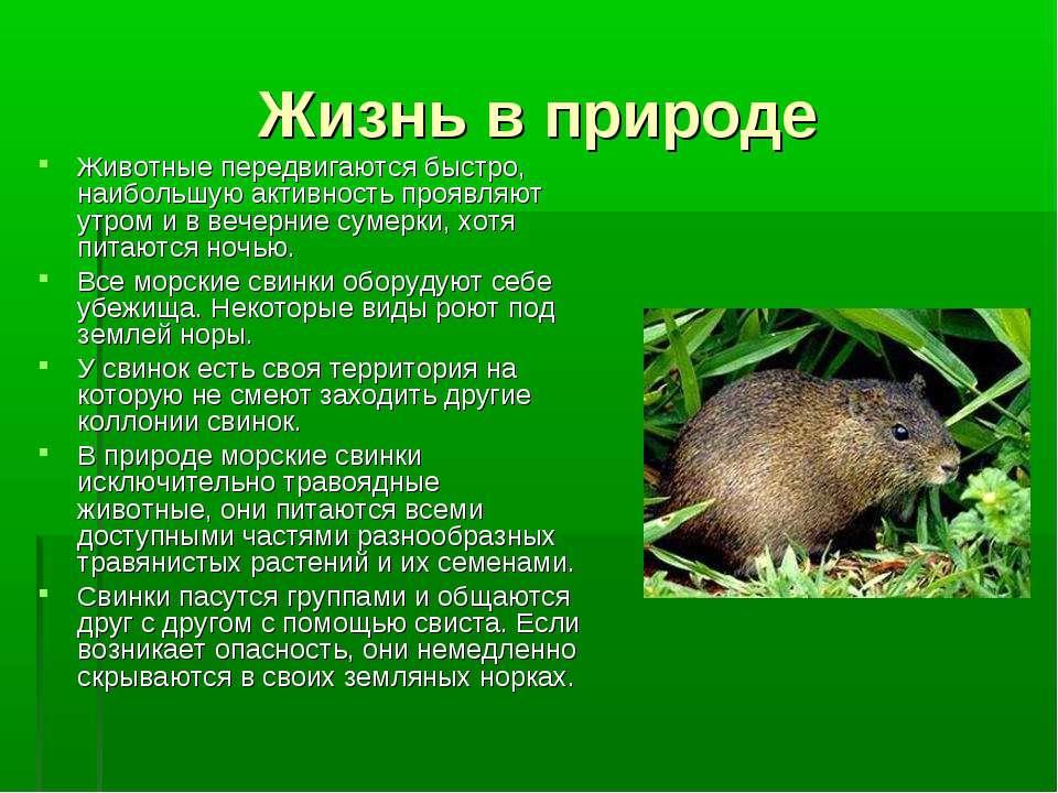 Жизнь в природе Животные передвигаются быстро, наибольшую активность проявляю...