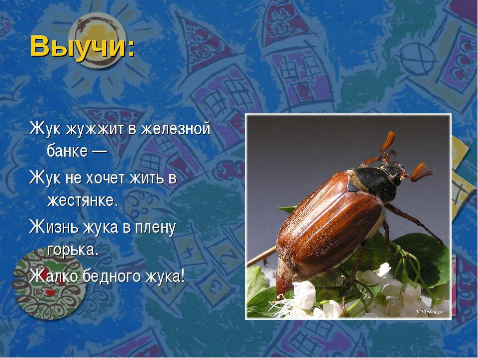 Выучи: Жук жужжит в железной банке — Жук не хочет жить в жестянке. Жизнь жука...