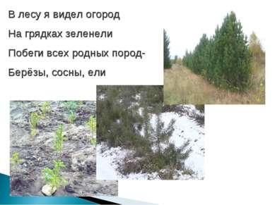 В лесу я видел огород На грядках зеленели Побеги всех родных пород- Берёзы, с...