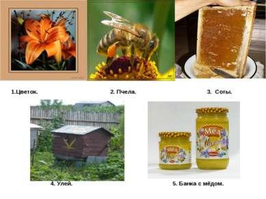 1.Цветок. 2. Пчела. 3. Соты. 4. Улей. 5. Банка с мёдом.