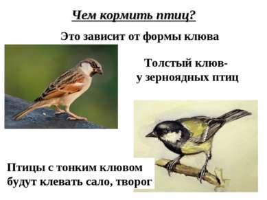 Чем кормить птиц? Это зависит от формы клюва Толстый клюв- у зерноядных птиц ...