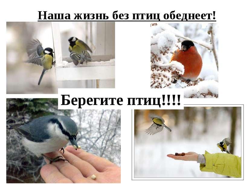 Наша жизнь без птиц обеднеет! Берегите птиц!!!!
