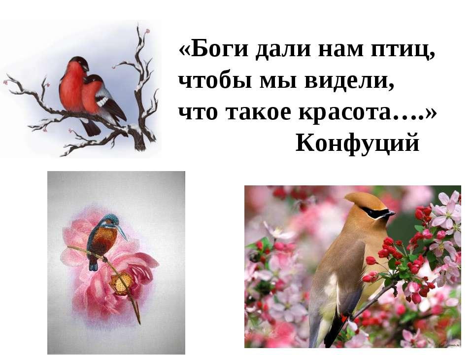 «Боги дали нам птиц, чтобы мы видели, что такое красота….» Конфуций