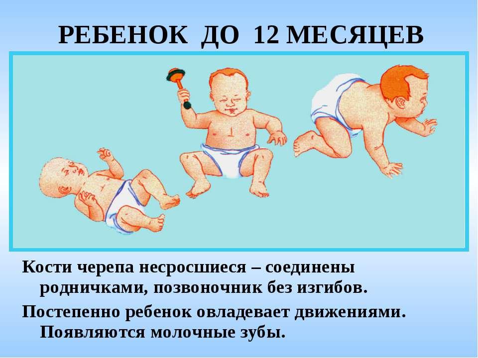 РЕБЕНОК ДО 12 МЕСЯЦЕВ Кости черепа несросшиеся – соединены родничками, позвон...