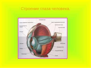Строение глаза человека.