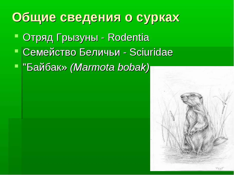 Общие сведения о сурках Отряд Грызуны - Rodentia Семейство Беличьи - Sciurida...