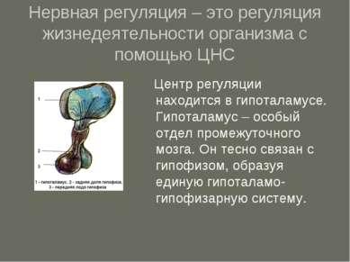 Нервная регуляция – это регуляция жизнедеятельности организма с помощью ЦНС Ц...