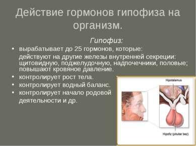 Действие гормонов гипофиза на организм. Гипофиз: вырабатывает до 25 гормонов,...