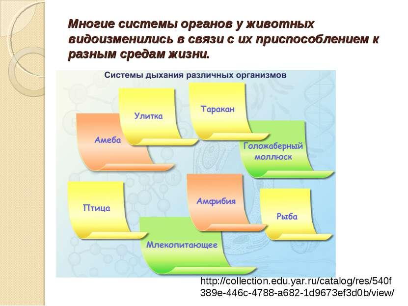 Многие системы органов у животных видоизменились в связи с их приспособлением...