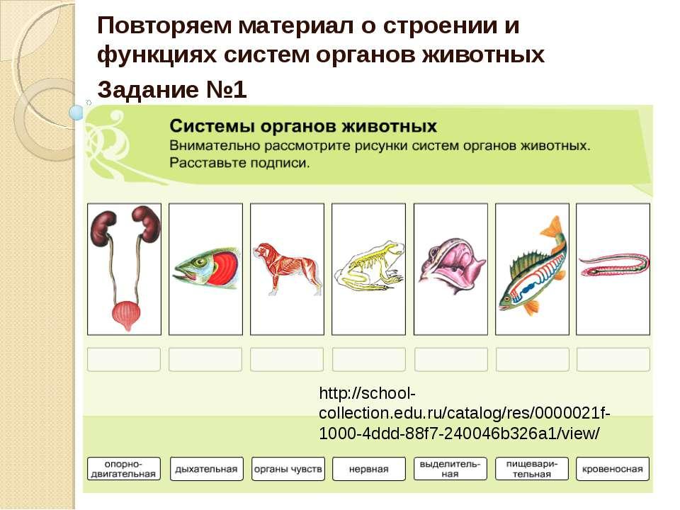 Повторяем материал о строении и функциях систем органов животных Задание №1 h...